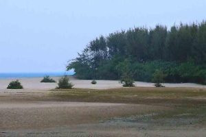 Lonely but lovely Talasari beach with lots of trees is one of the best beach in Odisha
