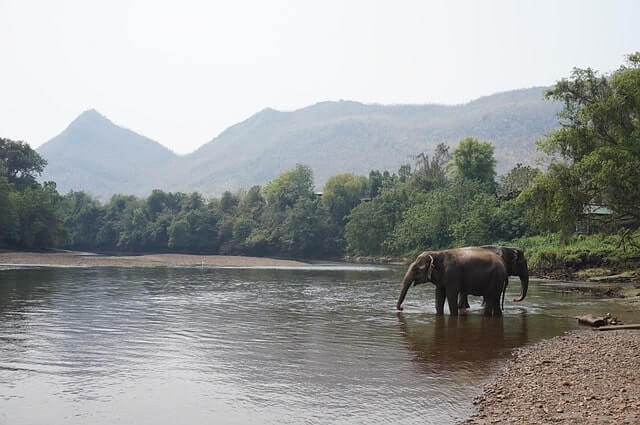 Elephants drinking water at a stream in Belghar Sanctuary