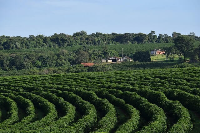 Coffee gardens are one of the most sought Kandhamal tourist places